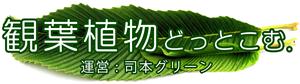 観葉植物 レンタル 神戸 司本グリーン