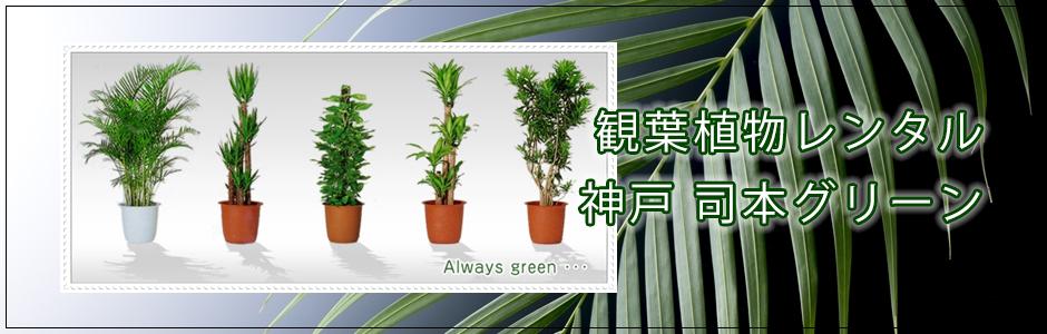 観葉植物、植木のレンタル、リースなら神戸の司本グリーンまで